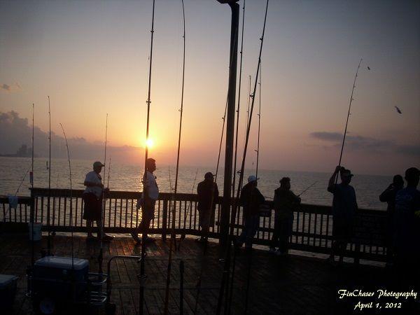 Viewing image 4 1 2012 sunrise gulf shores pier fishing for Gulf shores pier fishing forum