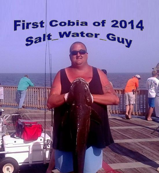 Wilson gets 1st Cobia of 2014
