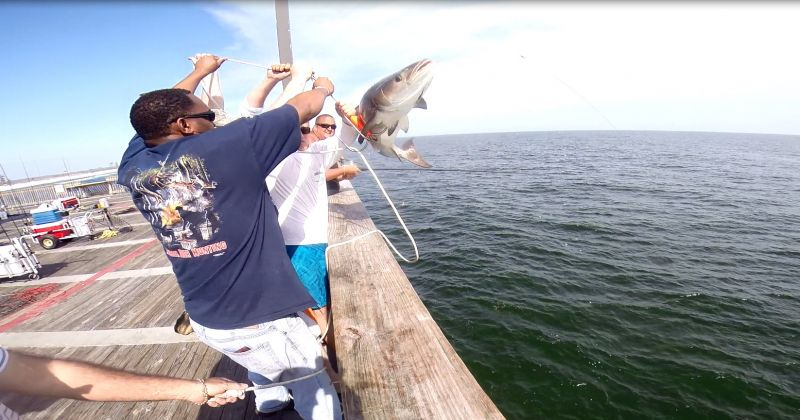 1st cobia of 2014 flying over the rail...