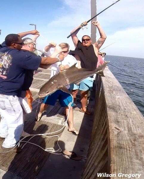 Viewing image wilson gulf shores pier fishing forum for Gulf shores pier fishing forum