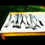 User:  Bamalife101