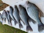 User:  firewhatfire
