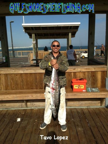 Viewing image tavo gulf shores pier fishing forum for Gulf shores pier fishing forum